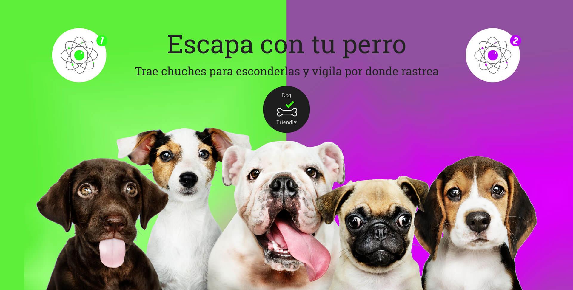 Escape Room con Perro